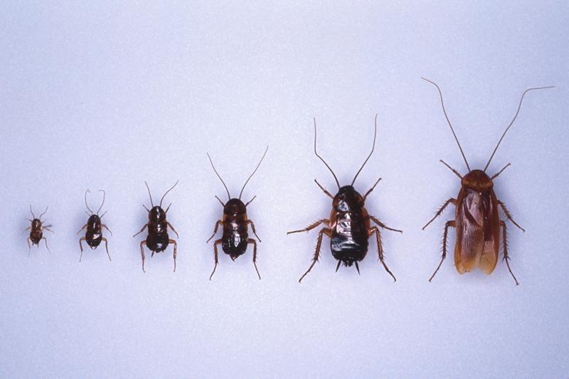 meta des insectes