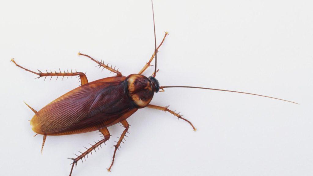 La métamorphose chez les insectes