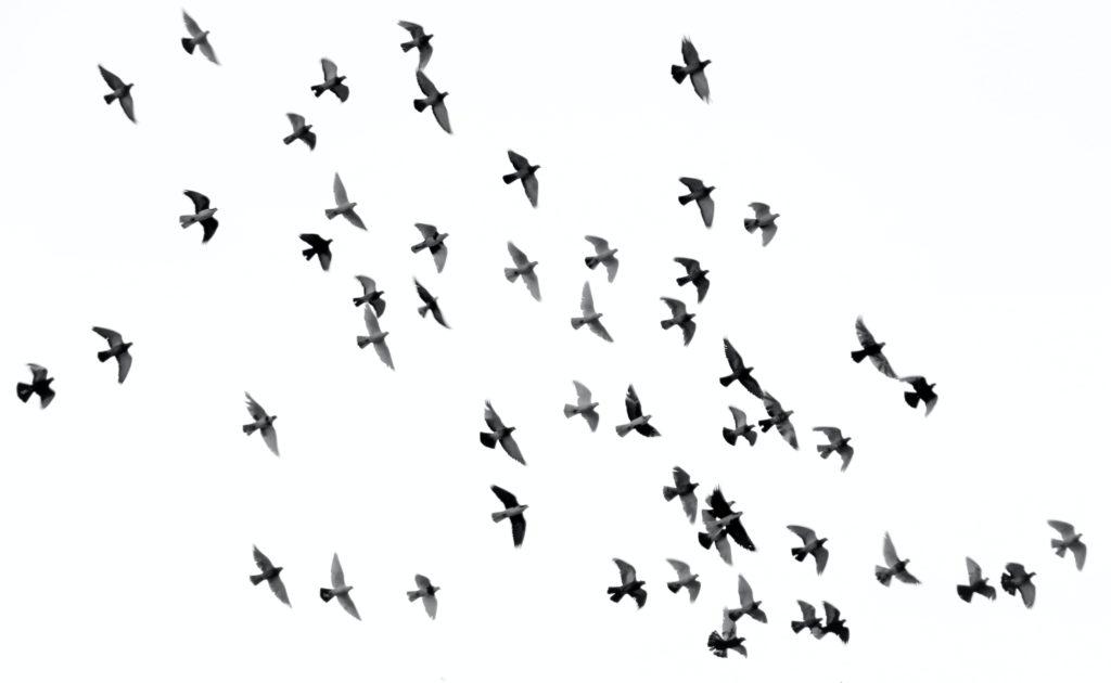 Toutes des oiseaux